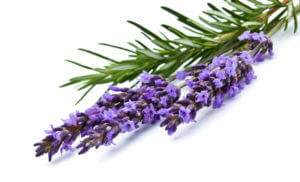 Lavender and rosmary